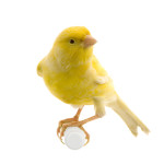 Gas detection canary